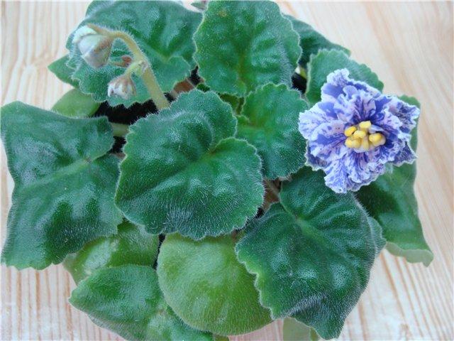 Весеннее  цветение (Хваст от Веры) - Страница 6 9bc12920de9b