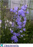 Лето в наших садах - Страница 4 8b850e309ccdt