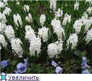 Наши домашние растения - Страница 2 7b99c22e6903t