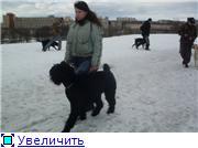 Дрессплощадка в Севастопольском парке в Минске - Страница 2 37cb30d4cb2ct