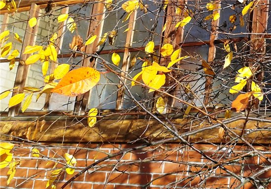 Осень, осень ... как ты хороша...( наше фотонастроение) - Страница 7 F63c432a6fd7