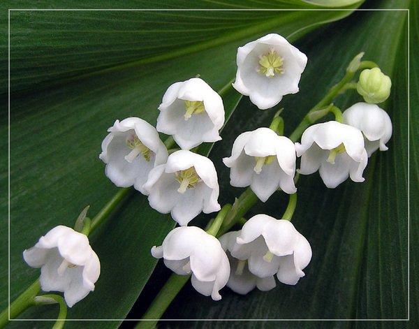 Поздравляем Всех с праздником весны!! Be7bcd6927fb