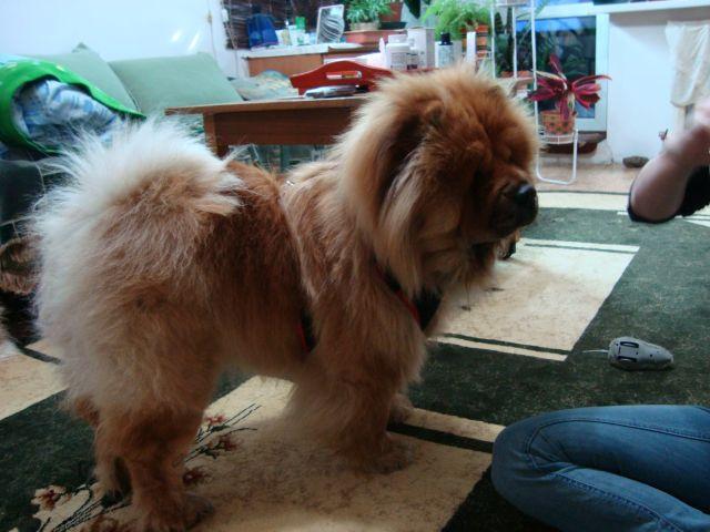 Мы нашли собаку! 3a5965615e56