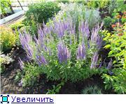 Лето в наших садах - Страница 6 64ccfb8bde37t