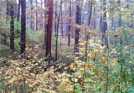 Осень, осень ... как ты хороша...( наше фотонастроение) - Страница 5 B1a0428ac94c