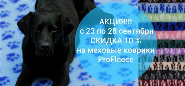Интернет-зоомагазин Red Dog: только качественные товары для  - Страница 7 7a25526e909e