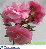 наши домашние цветники - Страница 2 96e223f64ef8t