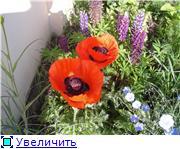 наши домашние цветники - Страница 2 1db31505ea4et