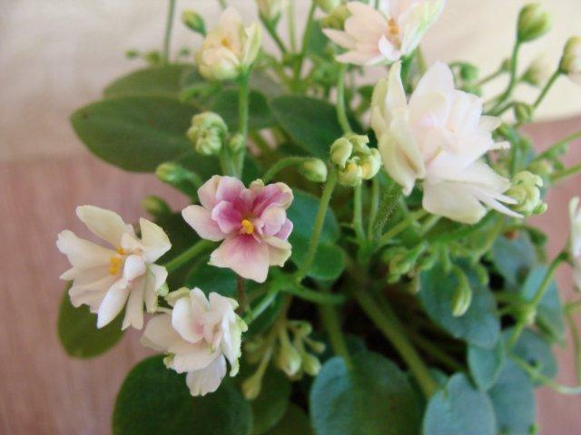 Мои цветочки - Страница 20 3c6fa0ee2adf