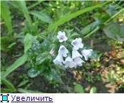 Лето в наших садах Fe4568a7fcd3t