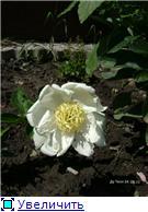 Лето в наших садах - Страница 3 01f33d19b1f5t