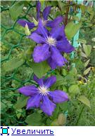 Лето в наших садах - Страница 6 Edf5668c96d9t