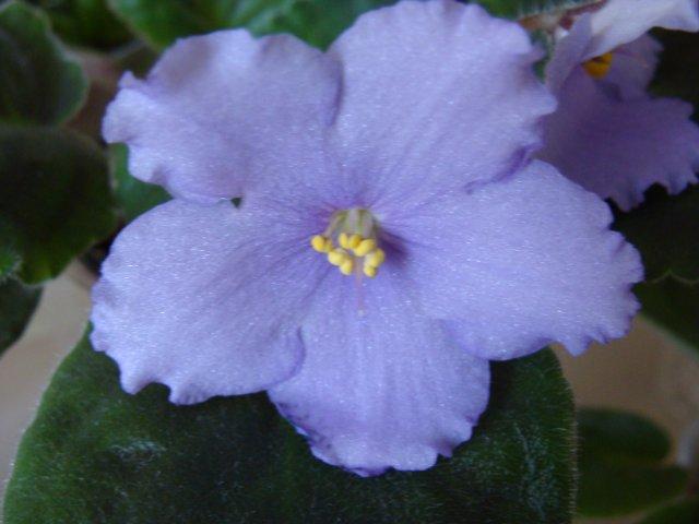 Мои цветочки Ae3034671f6a