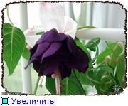 ФУКСИИ В ХАБАРОВСКЕ  3e66ec5cff04t