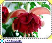 ФУКСИИ В ХАБАРОВСКЕ  - Страница 2 9ae69f4e637at