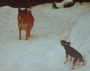 Диалог с собакой: сигналы примирения 5e8267d70505