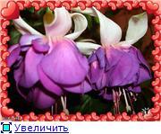 ФУКСИИ В ХАБАРОВСКЕ  Ebfc17a32d7bt