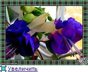 ФУКСИИ В ХАБАРОВСКЕ  - Страница 3 D8ced37fc4e5t
