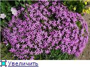 Растения для альпийской горки. 2be31f5fe900t