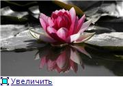 """Мастерская """"Алискин бонсай"""". 9f45610fa42et"""