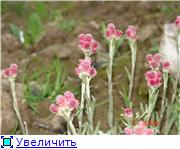 Растения для альпийской горки. - Страница 2 C414ec4d6c24t