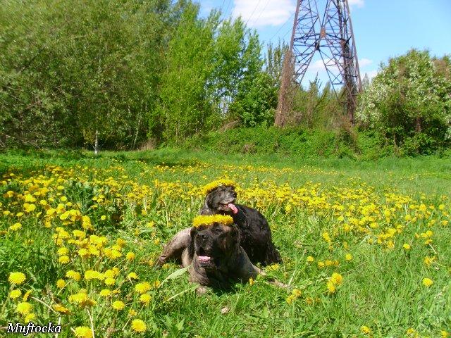 Собаки Татьяны Моисеенковой, кот Мензурка - Страница 4 A8a601b23609