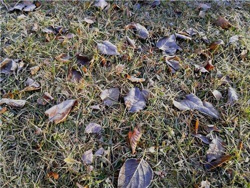 Осень, осень ... как ты хороша...( наше фотонастроение) - Страница 8 B67e2c5ed2f5