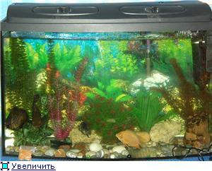 аквариум дома -советы бывалых акваримистов 9ddb2cff7086t