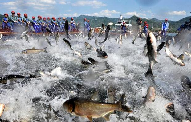 Озеро Циндаоху.Летающие рыбы 227804323221