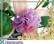 ФУКСИИ В ХАБАРОВСКЕ  65fd52cf09dct