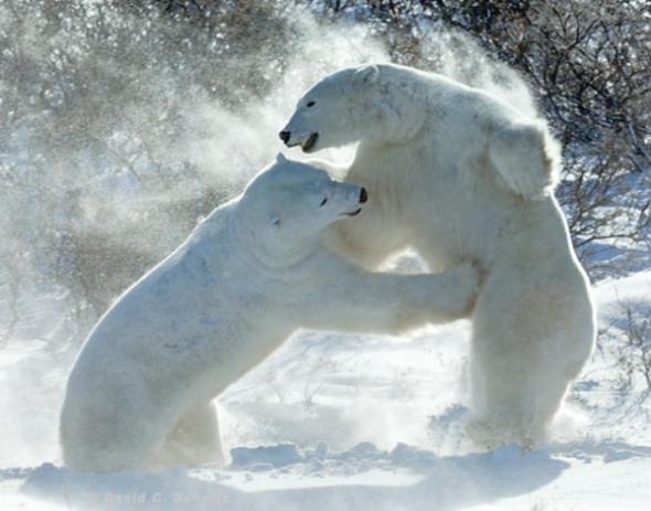 Ничто человеческое медведям не чуждо 0ae2e02fad2e