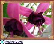 ФУКСИИ В ХАБАРОВСКЕ  - Страница 2 654763f47fb0t