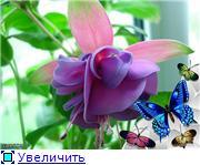 ФУКСИИ В ХАБАРОВСКЕ  - Страница 2 0ba848b45d37t