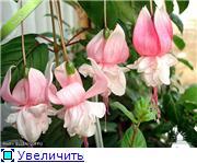 ФУКСИИ В ХАБАРОВСКЕ  - Страница 3 54e05ae544e8t