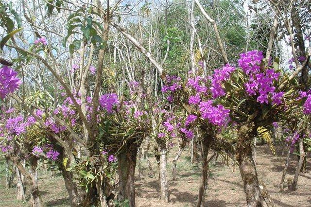 Costa Rica. Центральная Америка. - Страница 3 86498fae3b24