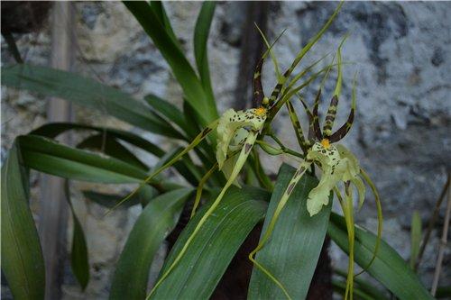 Выставка орхидей Никитского ботанического сада Ca6984945a0f