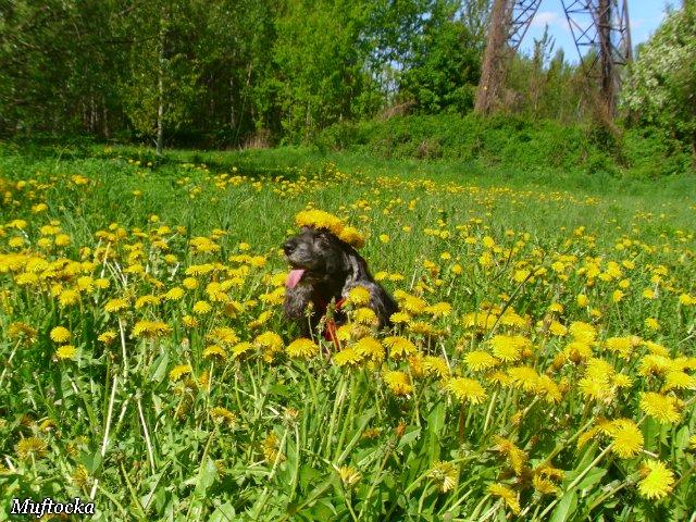 Собаки Татьяны Моисеенковой, кот Мензурка - Страница 4 48802c259ebc
