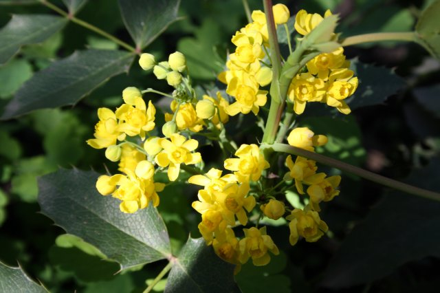 Растения от FILIGERa - Страница 2 Cd946fb765ce