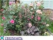 Розы 2011 1424041be13et