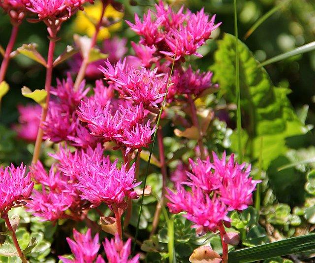 Экскурсия по Ботаническому Саду 7412b145f75f