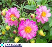Георгины в цвету - Страница 2 F9e6ad22083ct