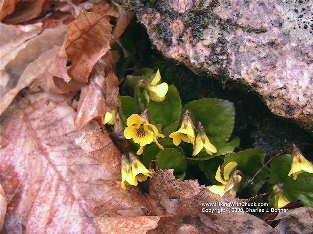 Уникальные растения мира. E43ff9b916f1