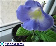 Семена глоксиний и стрептокарпусов почтой - Страница 2 Fd7adc64a157t