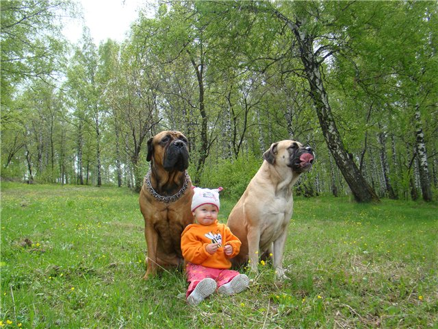 "Фотографии ""Бульмастиф и дети"" - Страница 6 D403d474e8a6"