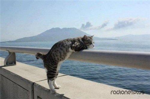 Сама по себе гулёна (о кошках) - Страница 2 9051bd0c7f41