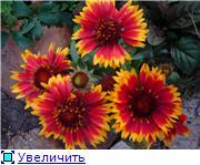Лето в наших садах - Страница 7 14211653272ft