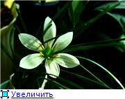 Зефирантес - Страница 2 B573d56d5689t