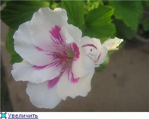 Красота без границ - Страница 3 78e015a2c3abt