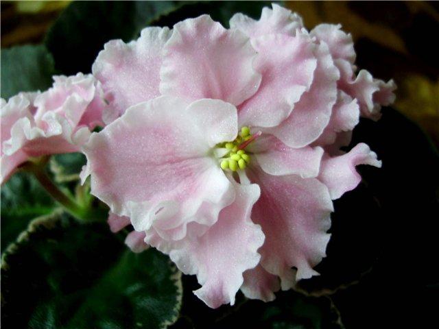 Розовая Акварель (Морев) 3be95c6b033f