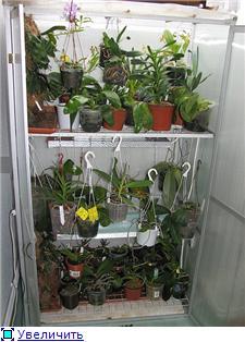 Размещение орхидей Ebb209bc693ft